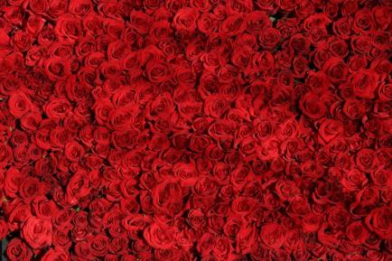 background-roses-rouges-1560x1040