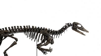 Piguet organise une vente aux enchères de paléontologie et d'art contemporain
